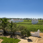 Cape Town Must Do: Babylonstoren